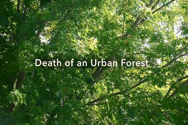 Death of an Urban Forest